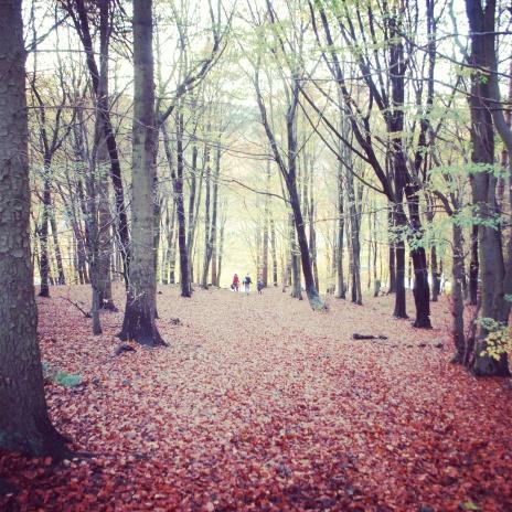Anston Woods, Derbyshire, England